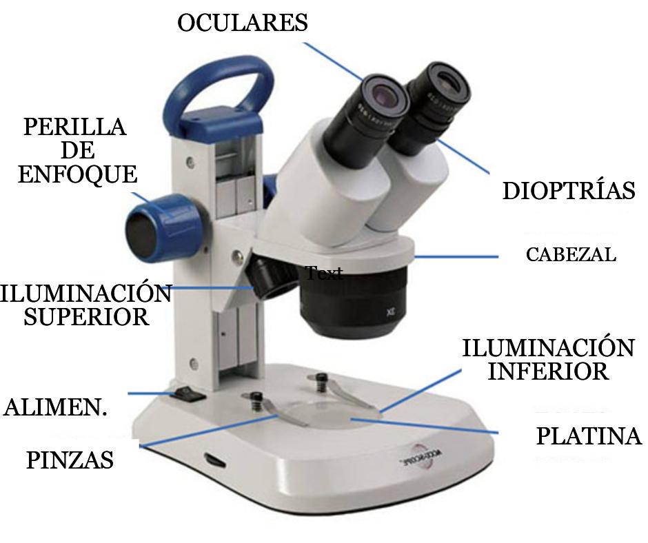 partes microscopio estereoscopico